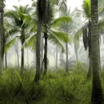 New study suggests palm oil production can have unexpected consequences