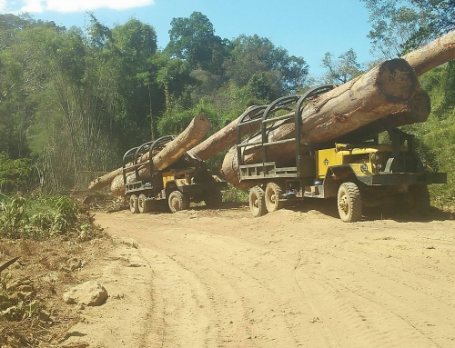 Cambodians and Laos are losing the last of their woodlands and forests