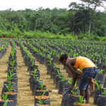 Is Equatorial Palm Oil turning the corner