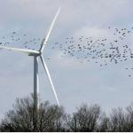 Birds, Bats and Wind Turbines