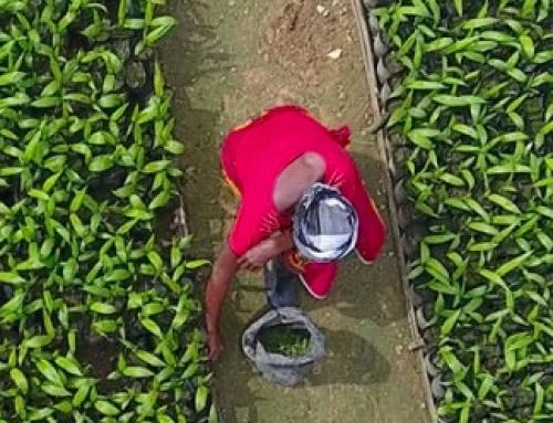 Equatorial Palm Oil profits remains elusive