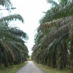 Tell us more on palm oil sources, say buyers