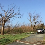 Worse tropical winds will kill more trees