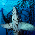 Discarded fishing nets and gear can be useful in recycling plastic waste in the seas